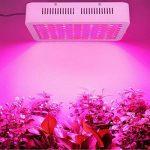 300W LED Lampe de Croissance Full Spectrum,Lampwin Lampe de Plante Intérieur UV IR LED avec 100 lampe LED pour Légumes,Fruit,Fleurs,etc de la marque Lampwin image 4 produit