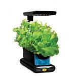 AeroGarden Miracle-Gro Sprout LED avec kit de capsules de graines d'herbes gourmets (noir) de la marque AeroGarden image 3 produit