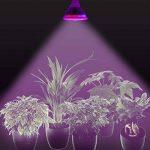 ampoule de croissance TOP 4 image 4 produit