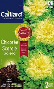 Caillard PFCC11115 Graines de Chicorée Scarole Solera de la marque Caillard image 0 produit