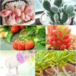 eclairage horticole TOP 3 image 1 produit