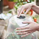 Elho Serre Green basics Transparent Taille rond 30 cm 6962303010000 de la marque Elho image 2 produit
