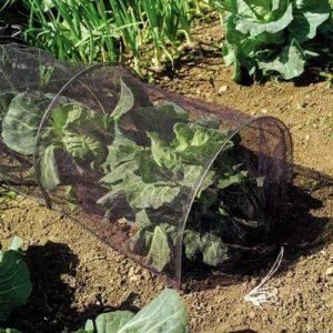 Filet du tunnel de croissance de 3m. Protège les plantes des oiseaux nuisibles. de la marque Other image 0 produit