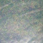 Foliarex UV2 Bâche en plastique pour serres Largeur 6 m de la marque Foliarex image 2 produit