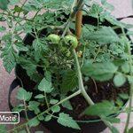 GardenMate® 3X Sacs Jardinière à Plantes en Tissu Non tissé 30L - GREENLINE de la marque GardenMate® image 3 produit