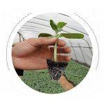 Gosaer Pots de Semis, 4 PCs 50 Trous Cellules de Semis Plateau de Démarrage de la Plante Fleur Plateau Bac de Plantation Conteneur de la marque Gosear image 3 produit
