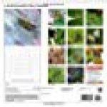 La biodiversite des insectes 2015: Plan serre d'insectes de la photographe, Dagmar Laimgruber de la marque Dagmar Laimgruber image 1 produit