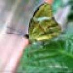 La Biodiversite Des Insectes 2018: Plan Serre D'insectes De La Photographe, Dagmar Laimgruber de la marque Dagmar Laimgruber image 1 produit