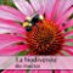 La biodiversite des insectes 2019: Plan serre d'insectes de la photographe, Dagmar Laimgruber de la marque Dagmar Laimgruber image 0 produit