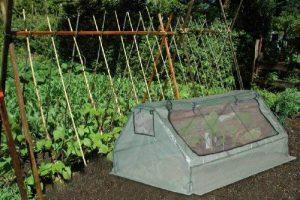 Lifetime Garden 34768 Serre 83 x 142 x 180 cm de la marque Lifetime Garden image 0 produit