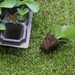 Lunji 3 semis Durable kit de germination 53x29cm - (50 trous) de la marque Lunji image 1 produit