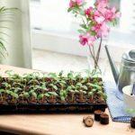 mini serre de jardin chauffante TOP 8 image 1 produit
