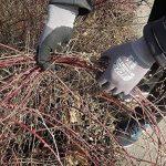 montage serre de jardin polycarbonate TOP 9 image 4 produit