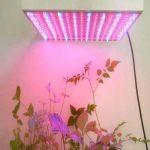 Mvpower 225 LED Lampe de Croissance 15W Lampe de Floraison Lumiere Rouge Bleu(165 Rouge+ 60 Bleu LED) Elcairage pour Culture Plantes de la marque Mvpower image 1 produit