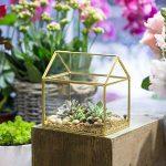 NCYP en forme de maison Close en verre géométrique Terrariumn de table Plante à fleurs Moss Fern avec couvercle basculant ¡ de la marque NCYP image 1 produit