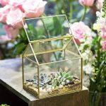 NCYP en forme de maison Close en verre géométrique Terrariumn de table Plante à fleurs Moss Fern avec couvercle basculant ¡ de la marque NCYP image 2 produit