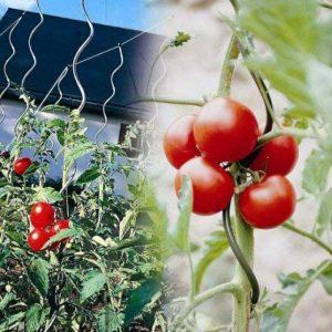 OSE Tuteur à Tomate avec chas - Lot de 5 - Gris de la marque OSE image 0 produit