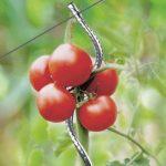 OSE Tuteur à Tomate avec chas - Lot de 5 - Gris de la marque OSE image 1 produit