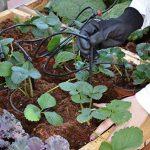 Palram Kit d'irrigation pour Serre de la marque Palram image 4 produit