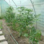 petite serre de jardin tunnel TOP 5 image 4 produit