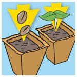 pot biodégradable pour semis TOP 1 image 4 produit
