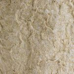 pot biodégradable pour semis TOP 10 image 2 produit