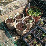 pot biodégradable pour semis TOP 9 image 3 produit