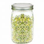 pot de germination TOP 6 image 3 produit