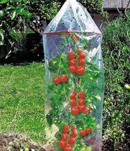 PRIMA TOOLS Prima Flora 610001 Lot de 3 housses pour tomates avec anneaux Transparent 1,3 x 0,65 m de la marque PRIMA TOOLS image 0 produit