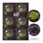 ProBache - Cloche à salades X6 serre de protection pour plants de la marque Probache image 2 produit
