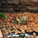 Qiao Nai (TM) 5/7/14/20W Mat Tapis Température Adjustable Chauffage Chauffant Pour Reptile Serpent Tortue Poissons Aquarium Amphibien (5W) de la marque Qiao Nai image 1 produit