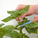 Root riot x 24 - bouturage- germination - Growth technology - Prrr24 de la marque Growth Technology image 3 produit