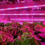 Ruban LED, Sparke 5050 5m Eclairage pour plantes de Croissance Flexible Lampe Ampoule de Culture Floraison Lumière + Alimentation 12V pour Plante de Pot Fruit Légume Végétale Fleur Eéclairage Greenhouse de la marque Sparke image 4 produit