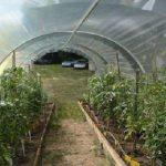 Serre à tomates 12m² - 3 m x 4 m - sans façade de la marque Richel image 1 produit