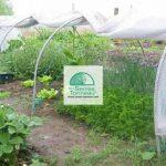 Serre Chenille de jardin- Largeur 1m30- Pvc armé Robustex 400 microns- avec aération SERRECHENILLE_0 de la marque les Serres Tonneau image 1 produit