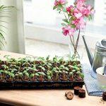 serre de germination chauffante TOP 4 image 2 produit