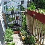 serre de jardin avec étagères TOP 1 image 3 produit