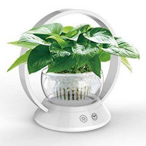 serre de jardin verre TOP 7 image 0 produit
