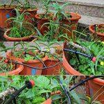 serre jardin potager TOP 8 image 4 produit