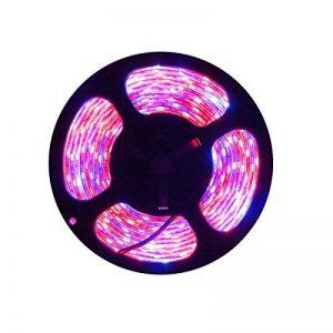 Tesfish Plante LED élèvent la lumière de Bande DC 12V IP65 Plein Spectre SMD 5050 Rouge Bleu 4: 1 Corde s'allume pour l'aquarium Serre de la marque Tesfish image 0 produit
