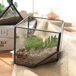 verre pour serre de jardin TOP 5 image 1 produit