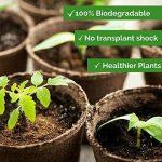 Watooma Pots biodégradables, 100Biodégradable Fibre Pots de semences pour Semis–6cm Rond de la marque Watooma image 3 produit